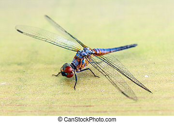 blue dragonfly is staying on the wood