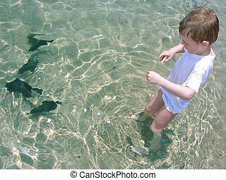 boy feed fish water