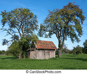 Small wooden shack in a meadow under a plum tree and a pear...