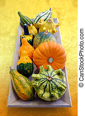Multiple baby pumpkins. - Vertical studio close up of...