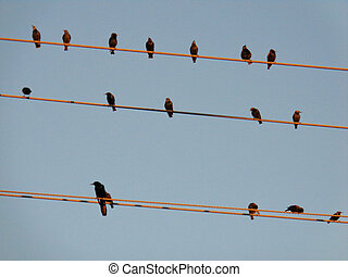 Birds On a Wire Cable picture