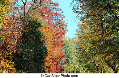 plane trees and beeches and elms with colored leaves in...