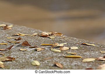 Wall in fall with deciduos dried leaves - Wall in autumn...