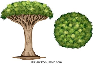 A Blood dragon tree on a white background