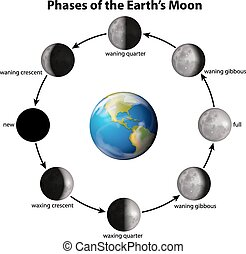Phases of the Earth's Moon on a white background
