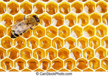 trabajando, abeja, en, Panal, cells, ,