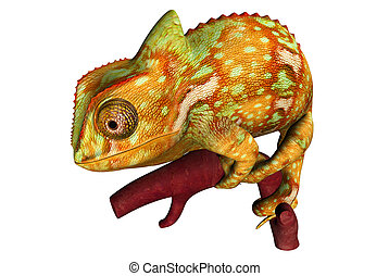Chameleons or chamaeleons family Chamaeleonidae are a...