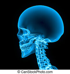 Skull blue - The human skull is a bony structure, the head...