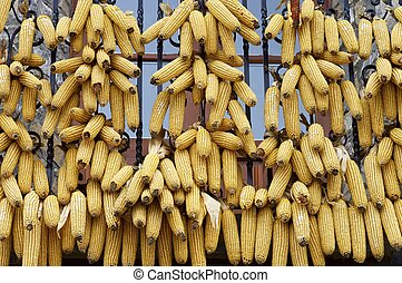 Corncobs - Corn cobs hanging on a balcony, Spain