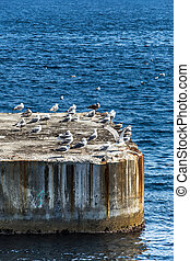 Breakwater - Bunch of seagulls over the breakwater