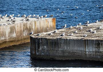 Breakwater - Bunch of seagulls over the breakwater.