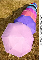 umbrellas on to the meadow