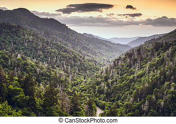 Newfound Gap - Smoky Mountains, Tennessee, USA mountainscape...