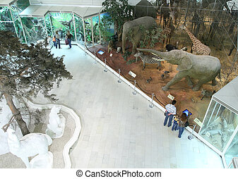 visitors in natural museum