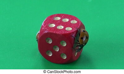 two ladybug ladybird on dice - two ladybug ladybird ladyluck...