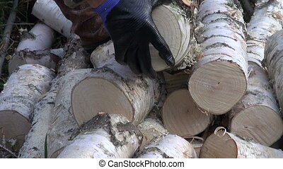 cutting firewood with a chain - cutting birch firewood with...
