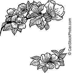 magnolia - Twig of magnolia flowers and leaves. Vintage...