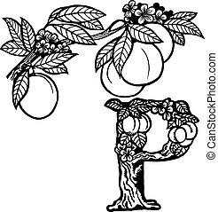 peach branch litera P - A branch of peach, flowers, fruit...