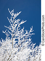 Rime on trees and branches on a sunny day.