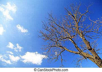 árbol, y, cielo,