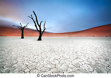 misty deadvlei