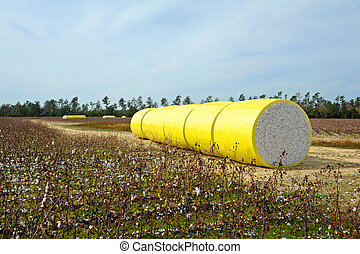 Bale of Cotton - A Round Bale of Harvested Cotton Wrapped in...