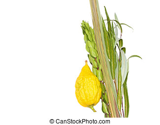 Jewish festival Sukkot four species lulav and esrog isolated...