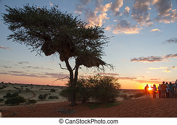 African sunset - Sun dropping down the hill in a african...
