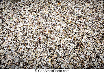 background with sea shells on the riverside