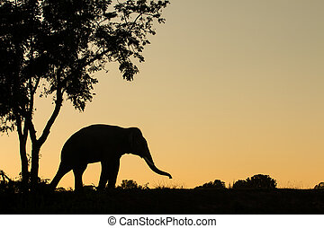 asia elephant in the forest at sunset