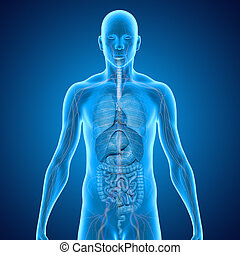 Organs blue - The human body is the entire structure of a...