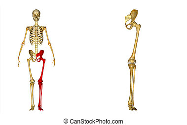 Left Lower Limb - A limb (from the Old English lim), or...
