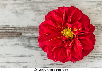 Red Star Flower - Red star flowers on wooden white...