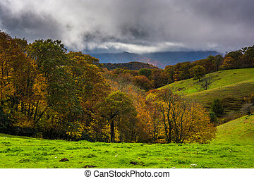 Autumn color and rolling hills in Moses Cone Park, on the...