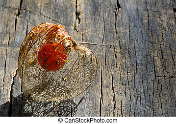 physalis fruit on wooden background