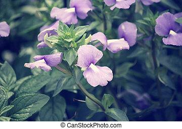 vintage purple flowers