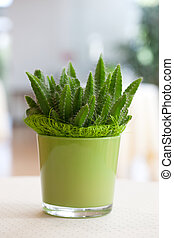 Cactus - A cactus in a light green flower pot made of glass...