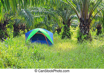 Tourist tent in palm plantation