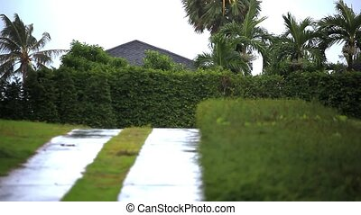 Two footage. Palm trees in Koh Samui island during cyclonic...