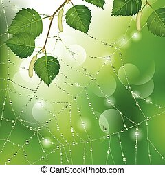 Spider web with leaves - Spider web with dew and leaves of...