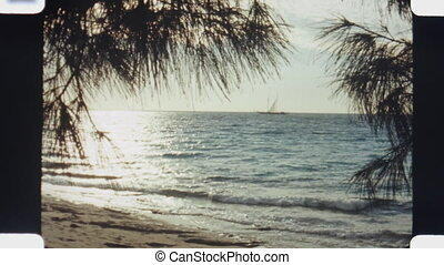 Ocean view. (Vintage 1970s film) - Ocean view through trees...