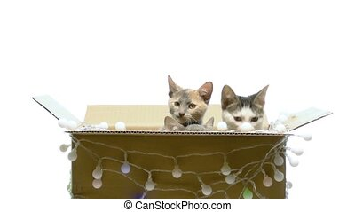 Several kittens playing in a box - Little funny kittens...
