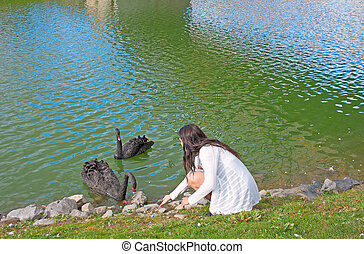 Teenager Feeds Black Swans - Young lady feeds the black...