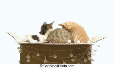 Several kittens playing in a box