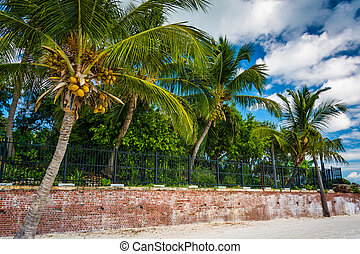 Palm trees at Higgs Beach, Key West, Florida.