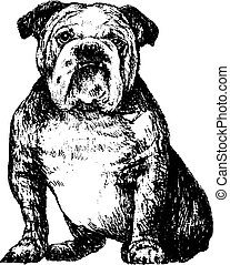 bulldog - Image of black and white bulldog , hand draw...