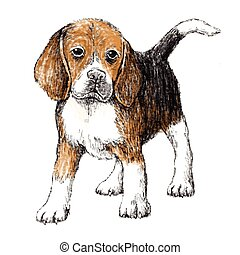 Beagle - Image of beagle , hand draw vector.