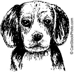 Beagle - Black and white beagle , hand draw vector
