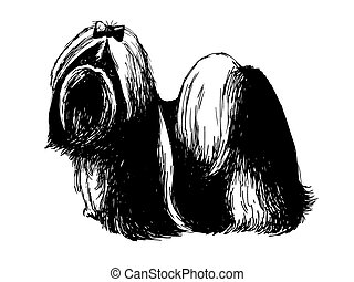 Shih tzu - Image of Shih tzu , hand drawn vector