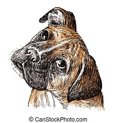 Boxer - Image of Boxer , hand drawn vector.